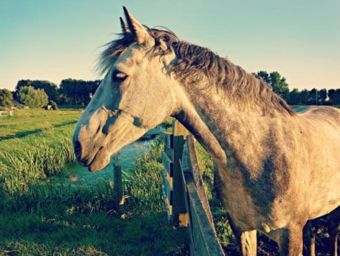 Auxiliar clínic equestre